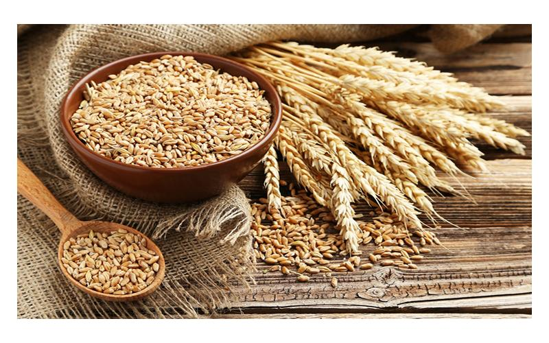 Buğday verimi artırmak için gübreleme ve bakım