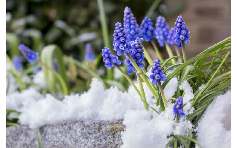 Kış aylarında evde ve bahçede yapılması gerekenler