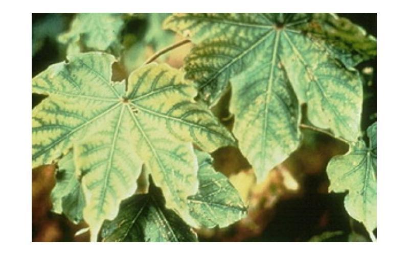 bitkilerde çinko eksikliği ve giderme yolları