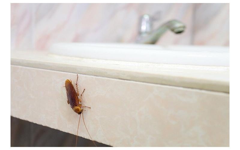 Hamam böceklerini kovacak 9 etkili çözüm